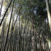 大多喜町 放置竹林伐採
