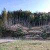 千葉県富津市 放置竹林伐採現場